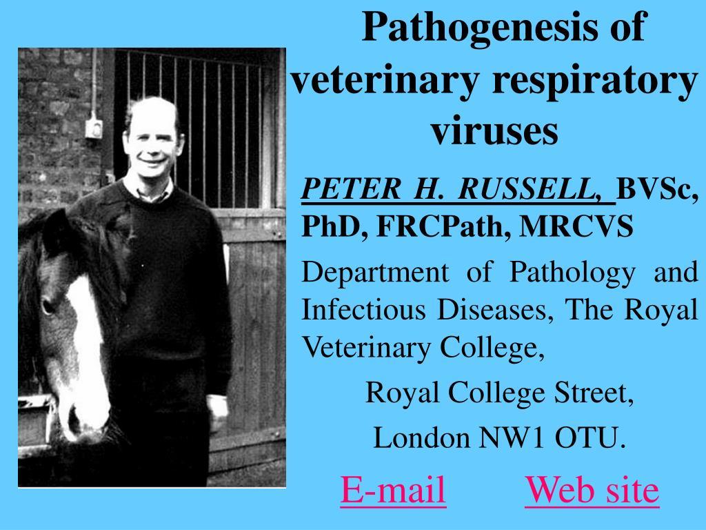 pathogenesis of veterinary respiratory viruses l.