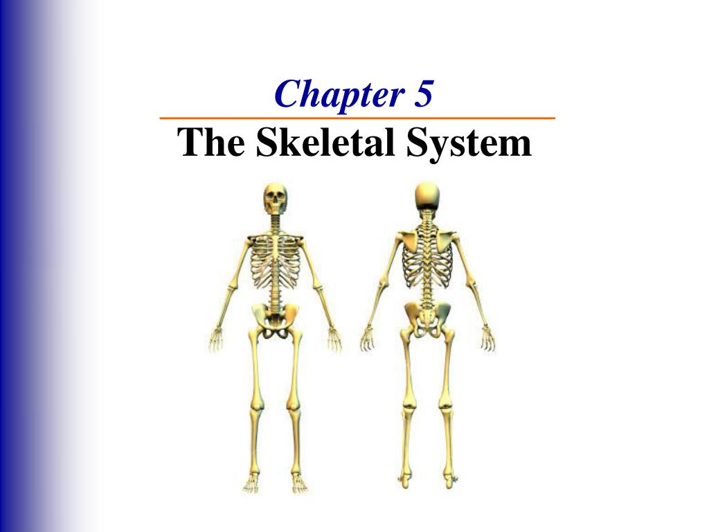 Chapter 5 The Skeletal System Anatomy And Physiology Coloring ...