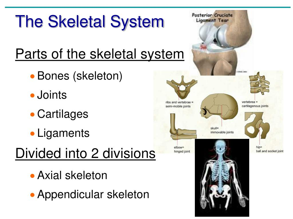 anatomy chapter 5 Human anatomy & physiology assignment sheet chapter 5 & 6- tissues and the integumentary system hole's online student center: download chapter 5 outline hole's online student center: download chapter 6 outline.
