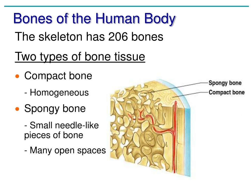 anatomy chapter 5