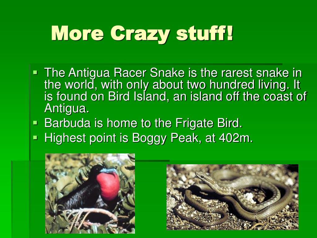 More Crazy stuff!