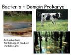 bacteria domain prokarya13