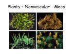 plants nonvascular moss