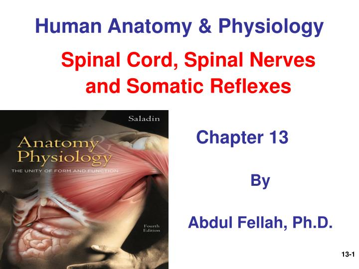 human anatomy and physiology of the