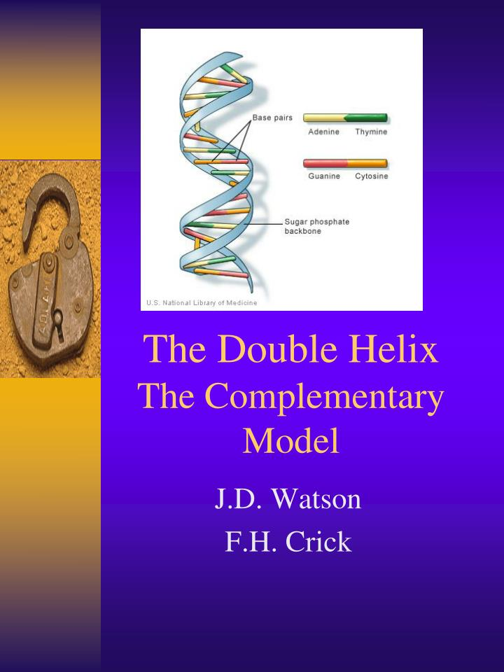 the double helix the complementary model n.