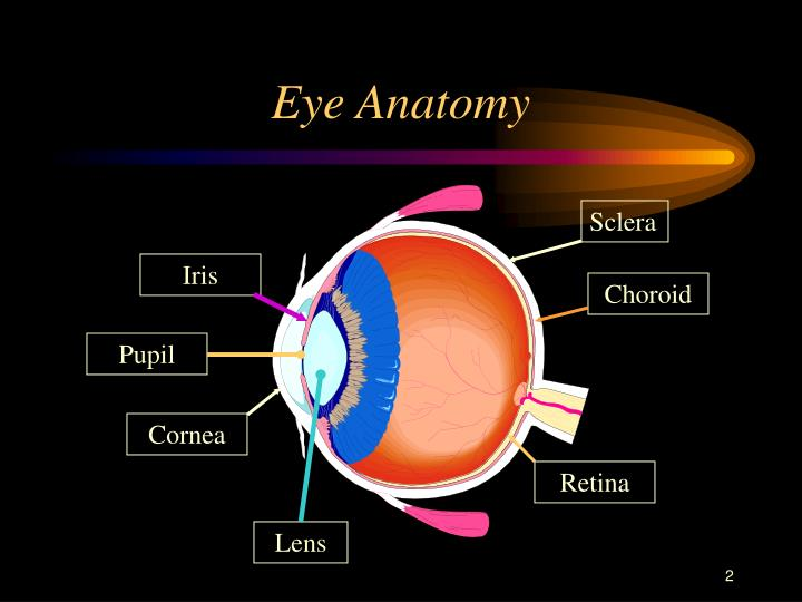 Ppt Eye Injuries Powerpoint Presentation Id747648