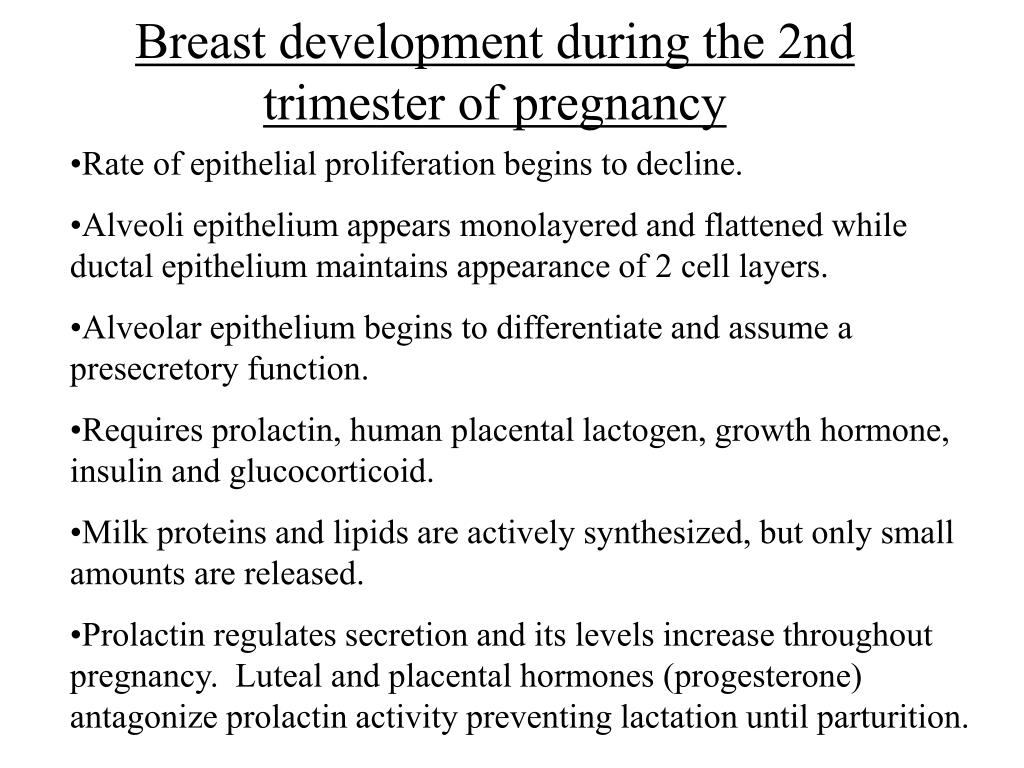 Breast development during the 2nd trimester of pregnancy