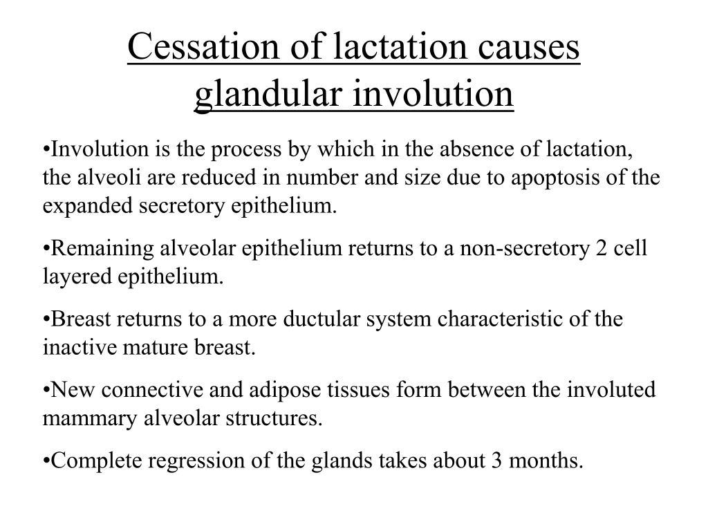 Cessation of lactation causes glandular involution