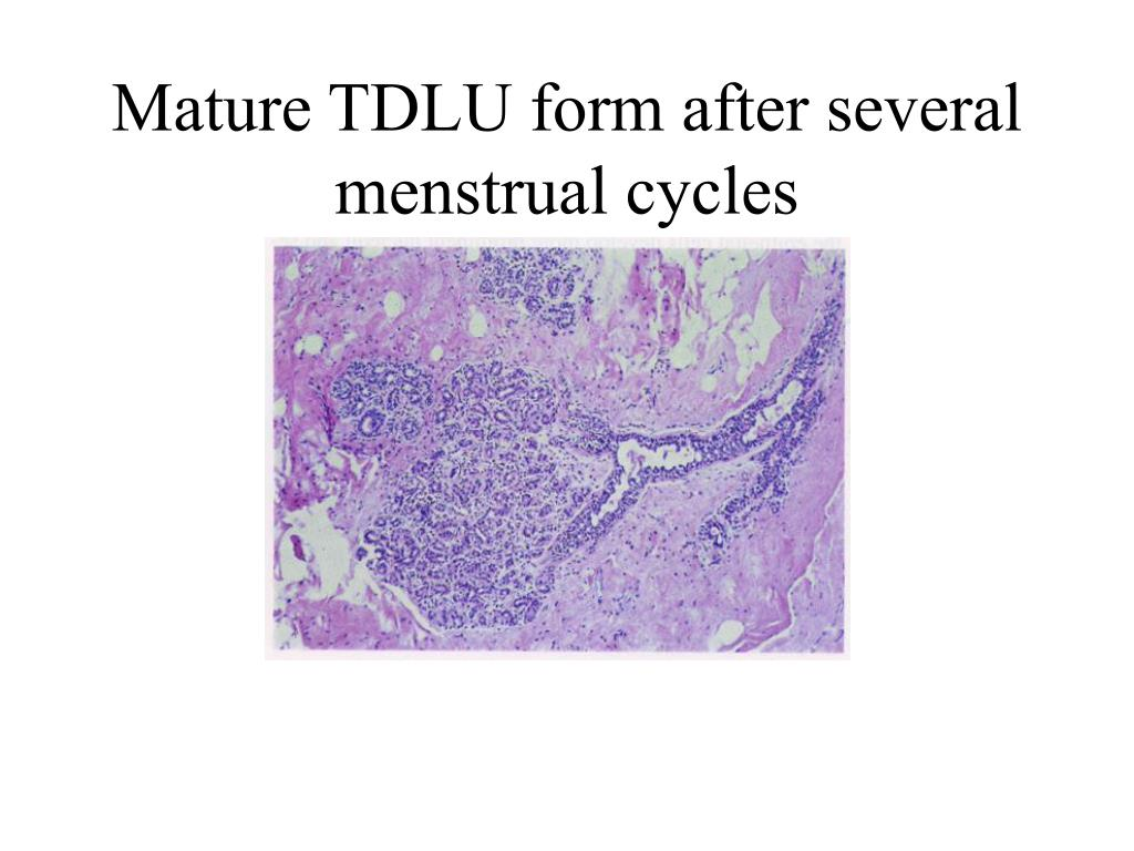 Mature TDLU form after several menstrual cycles