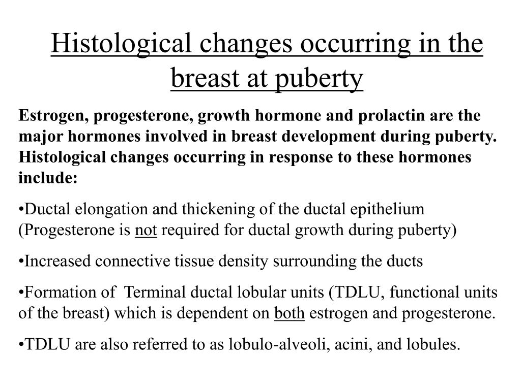 Histological changes occurring in the breast at puberty