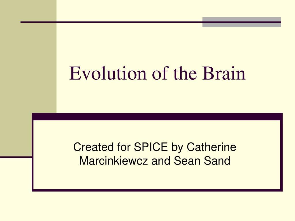 evolution of the brain l.