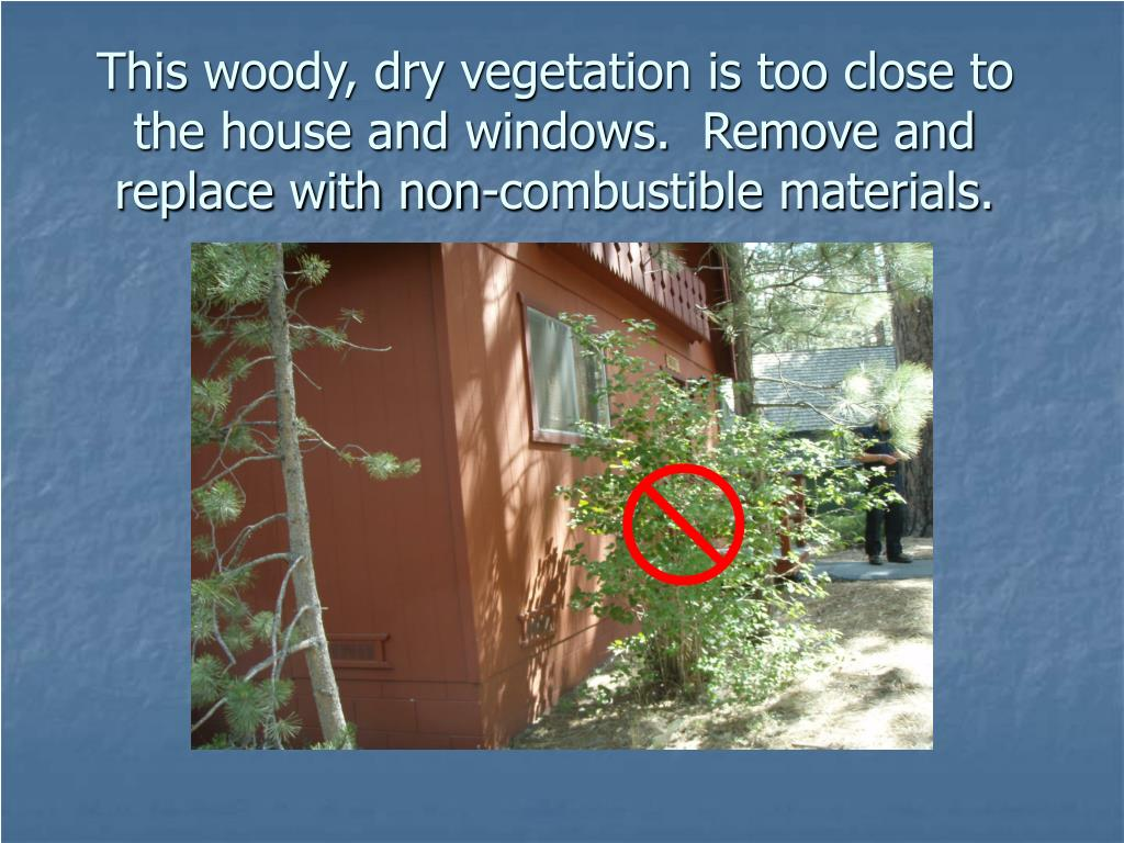 This woody, dry vegetation is too close to the house and windows.  Remove and replace with non-combustible materials.
