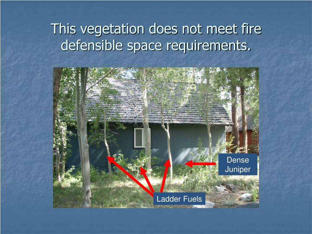 This vegetation does not meet fire defensible space requirements.