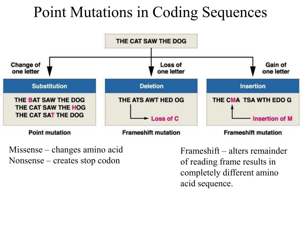 Point Mutations in Coding Sequences