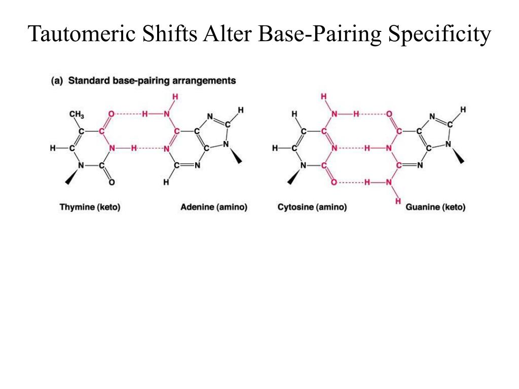 Tautomeric Shifts Alter Base-Pairing Specificity