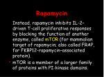 rapamycin42