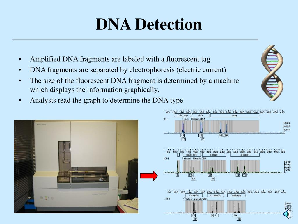 DNA Detection