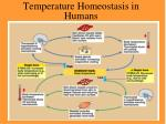 temperature homeostasis in humans