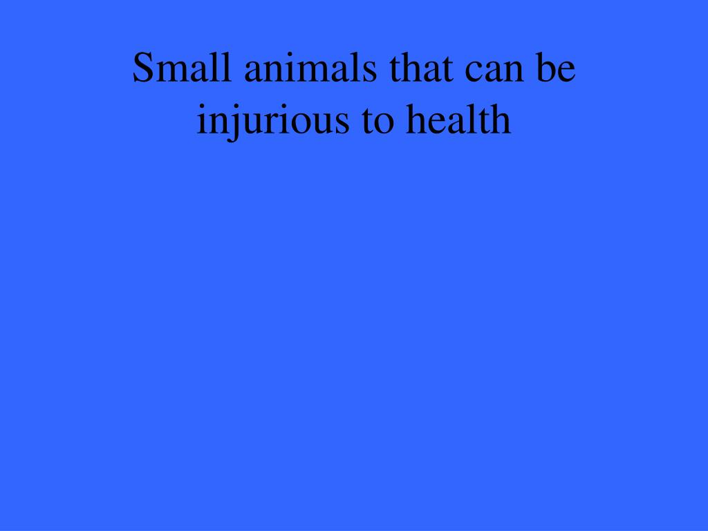 Small animals that can be injurious to health