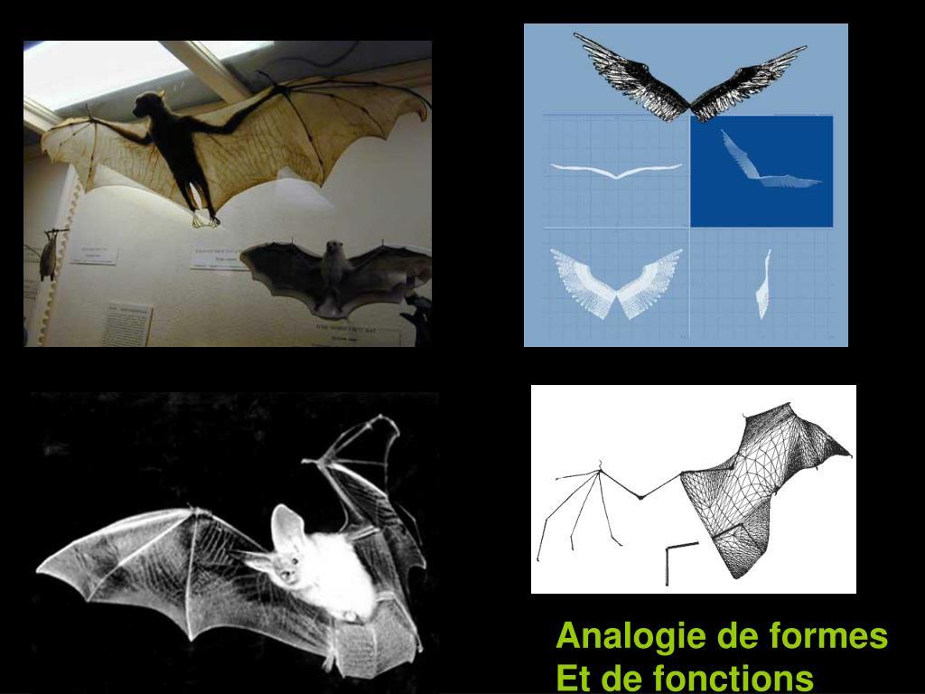 Analogie de formes