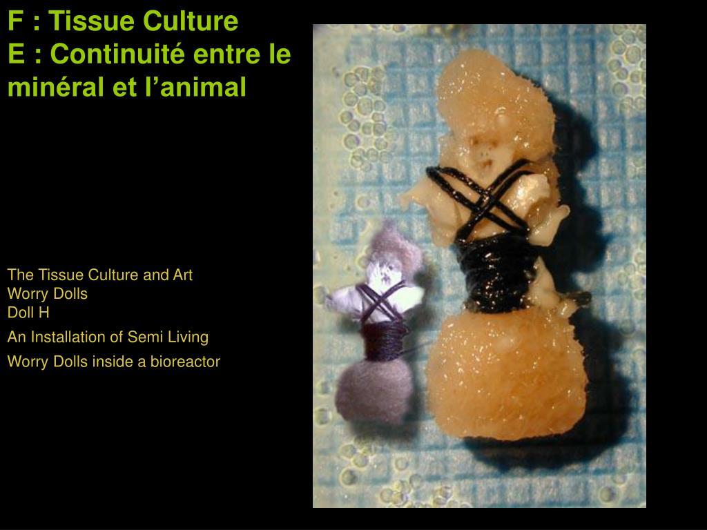 F : Tissue Culture