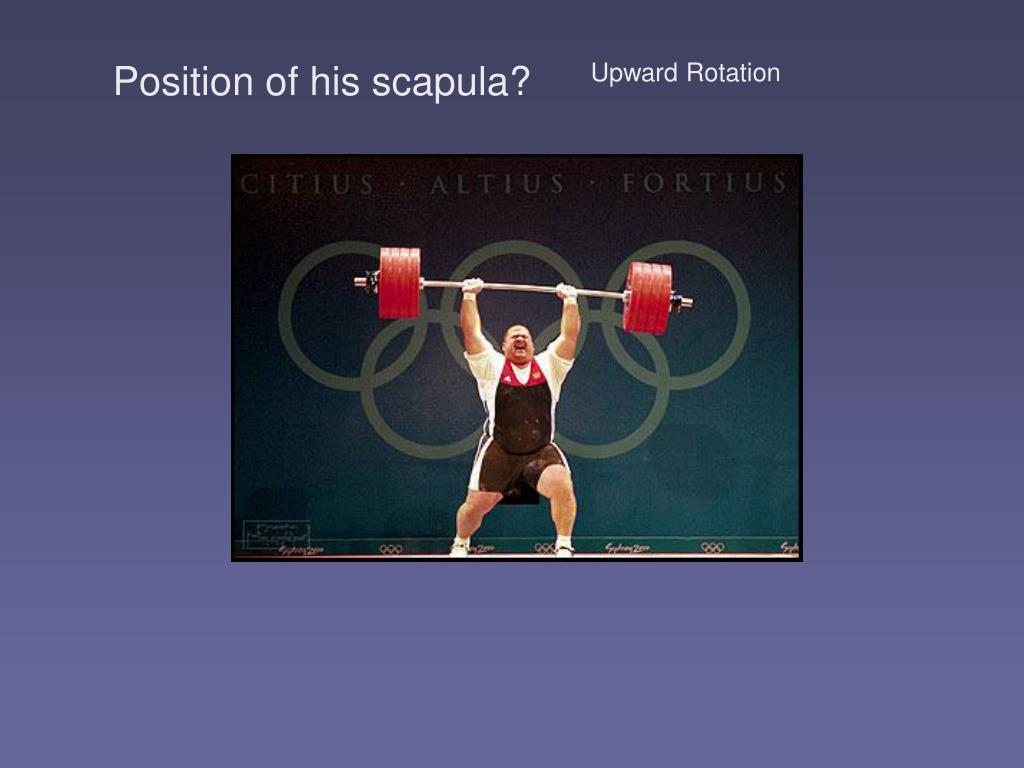 Position of his scapula?