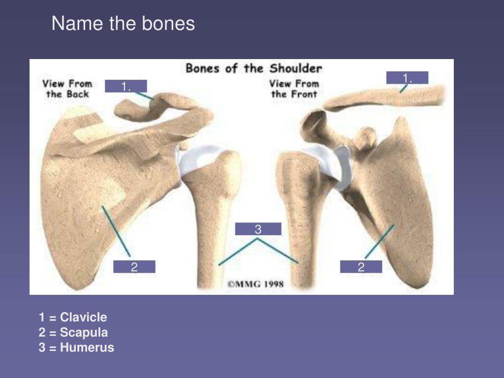 Name the bones