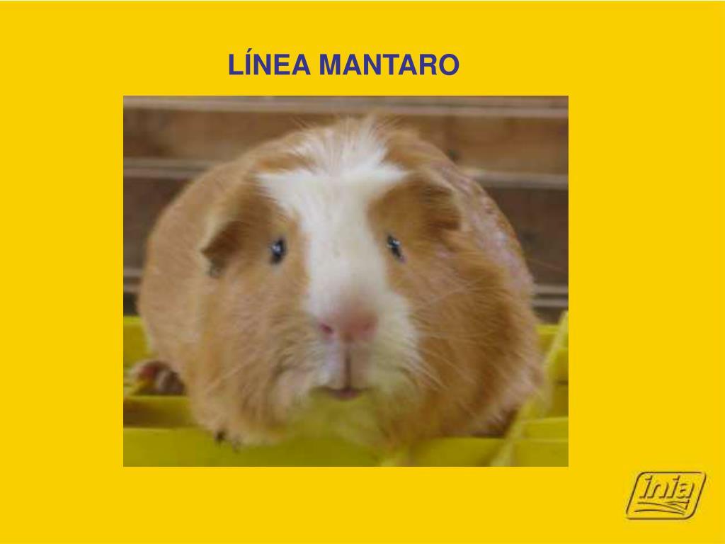 LÍNEA MANTARO