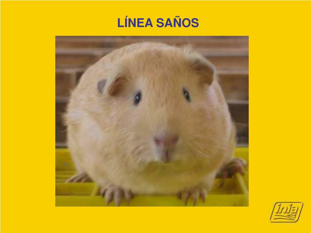LÍNEA SAÑOS