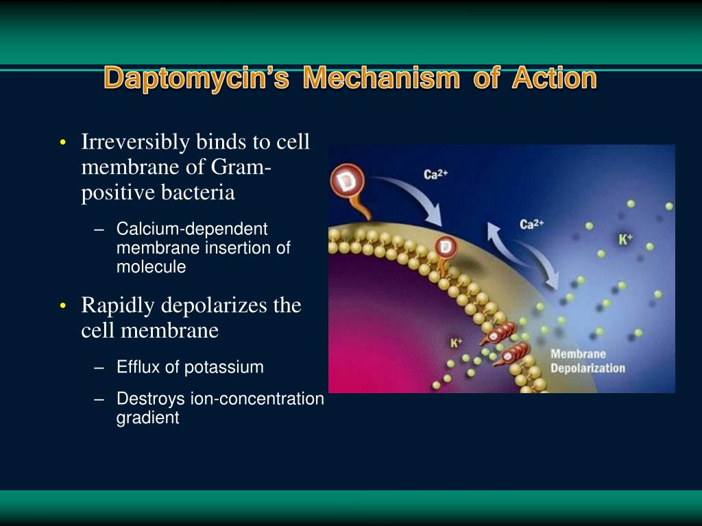 Daptomycin's Mechanism of Action