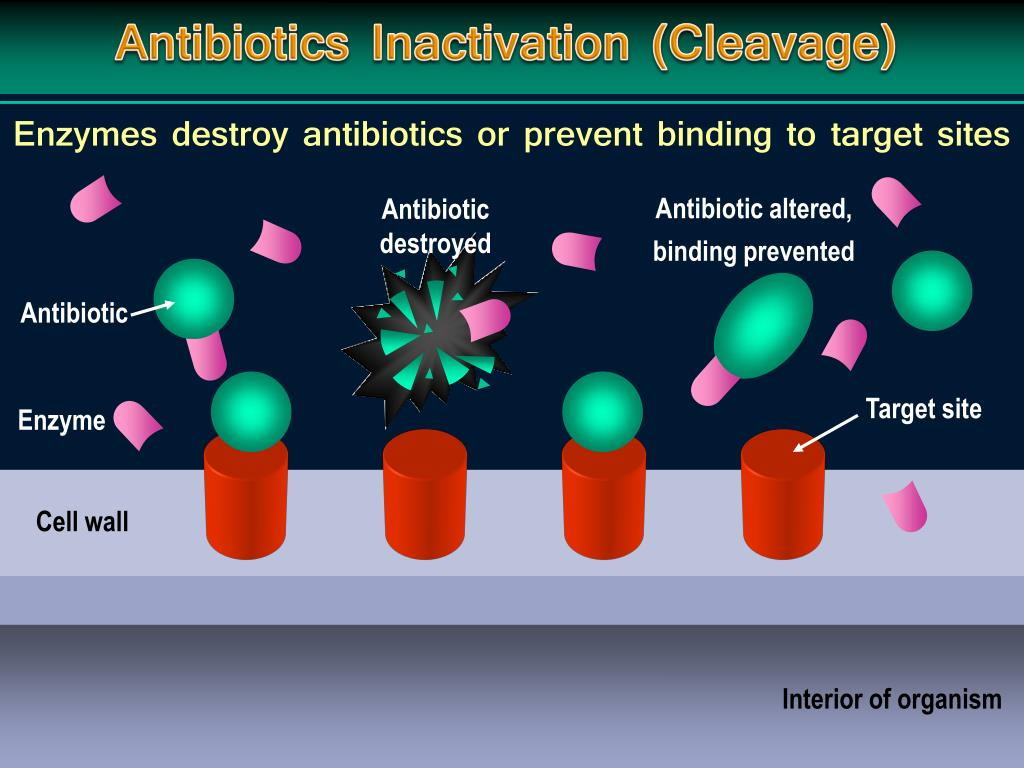 Antibiotics Inactivation (Cleavage)