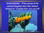 assessment what group of the animal kingdom does this animal belong to explain how you can tell32