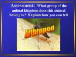 assessment what group of the animal kingdom does this animal belong to explain how you can tell35