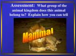 assessment what group of the animal kingdom does this animal belong to explain how you can tell36