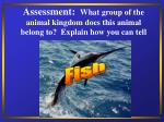 assessment what group of the animal kingdom does this animal belong to explain how you can tell38