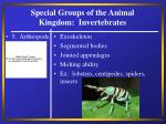special groups of the animal kingdom invertebrates21