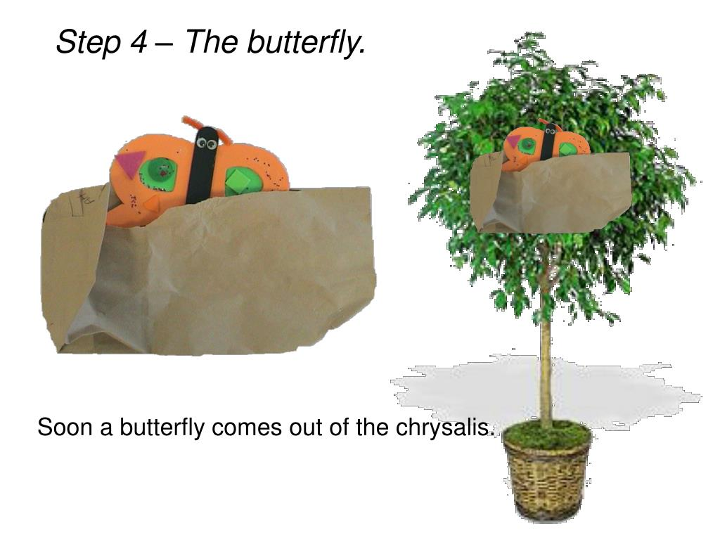 Step 4 – The butterfly.