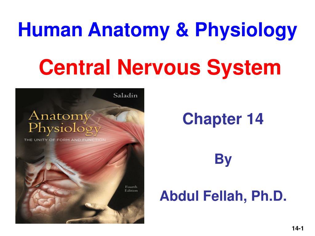 Ppt Human Anatomy Physiology Powerpoint Presentation Id756796