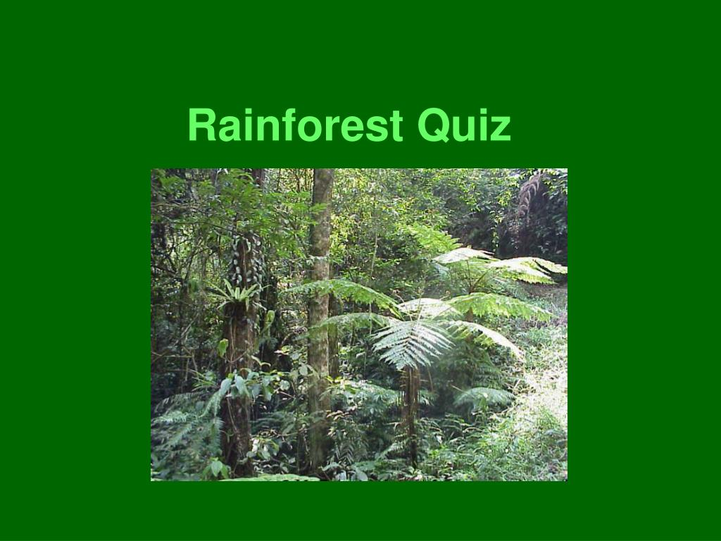 ppt - rainforest quiz powerpoint presentation