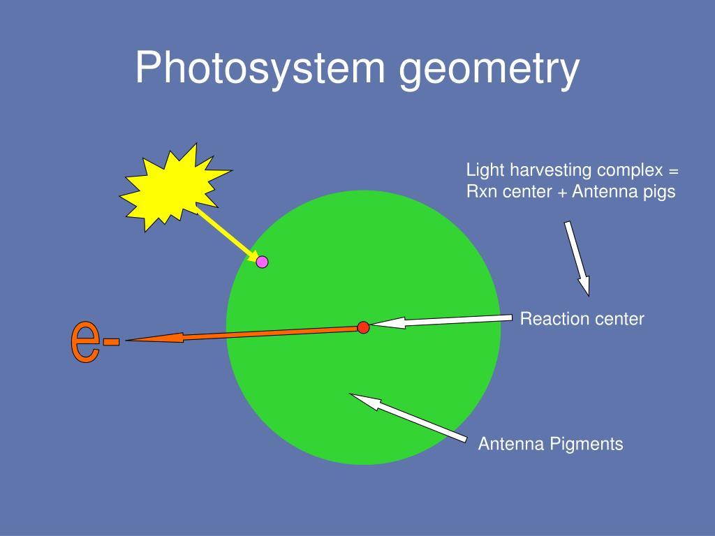 Photosystem geometry