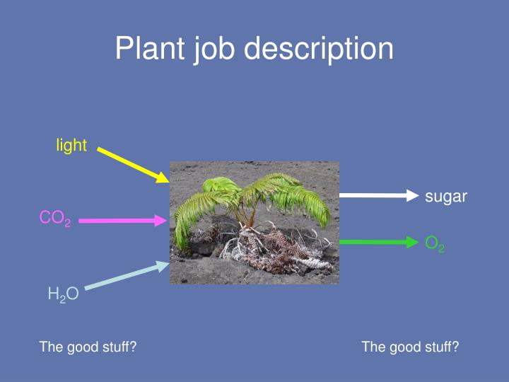 Plant job description