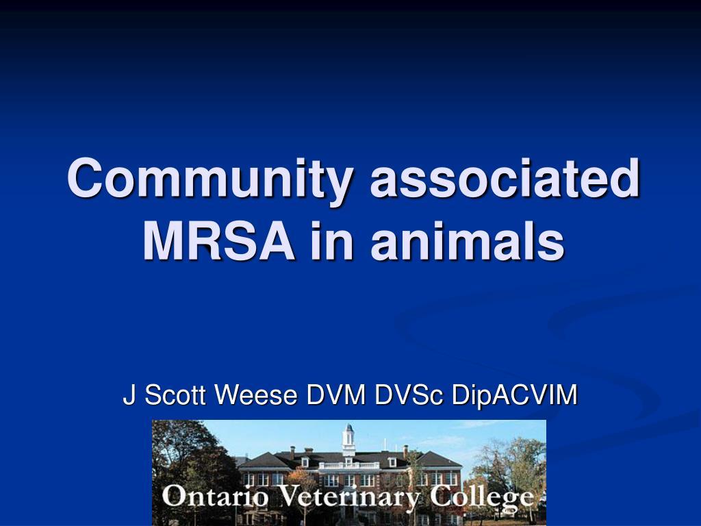 community associated mrsa in animals l.