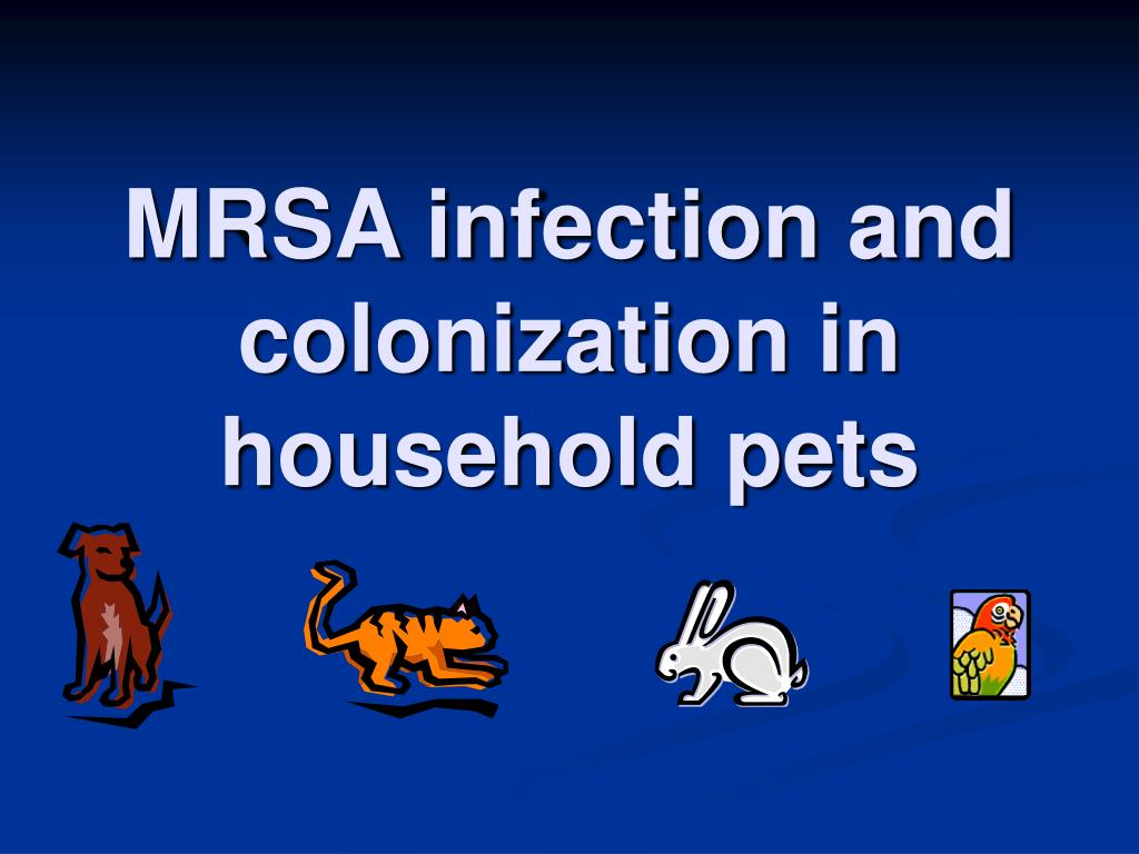 MRSA infection and colonization in household pets