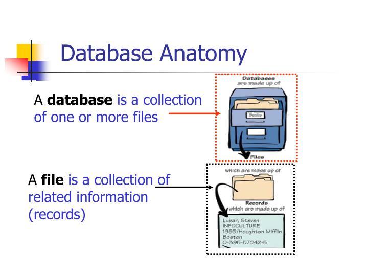 Database Anatomy