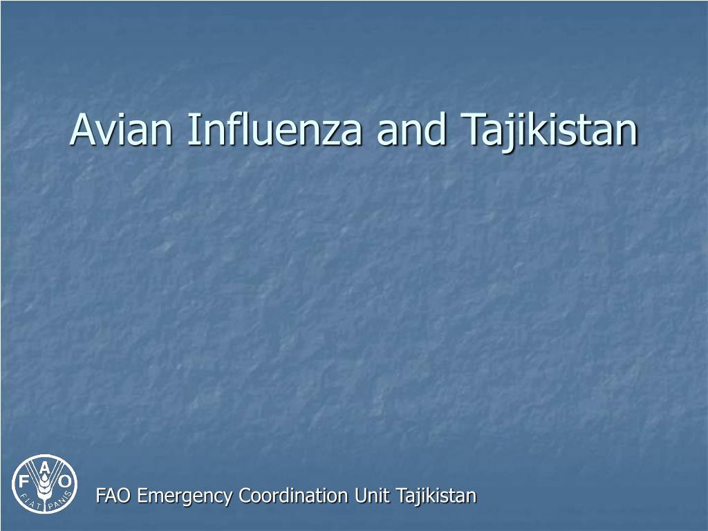 avian influenza and tajikistan l.