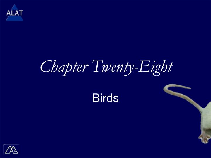 Chapter twenty eight