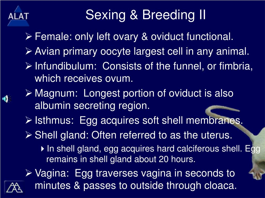 Sexing & Breeding II