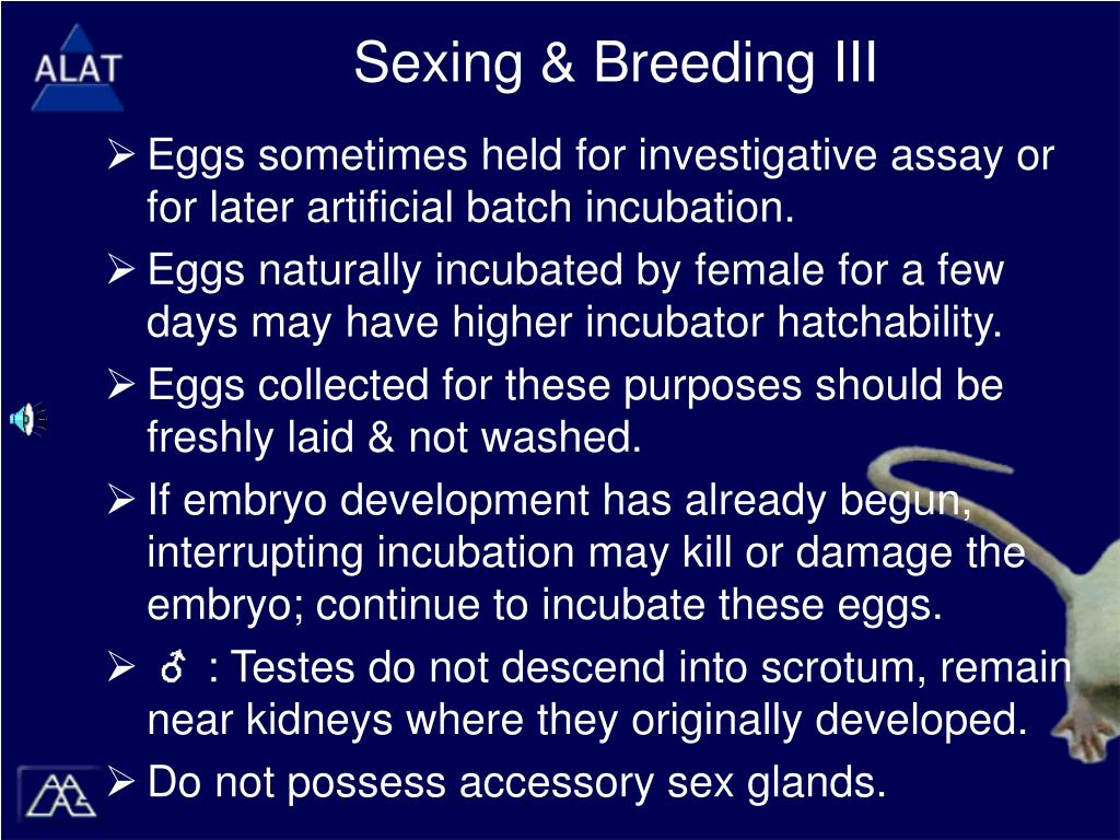 Sexing & Breeding III