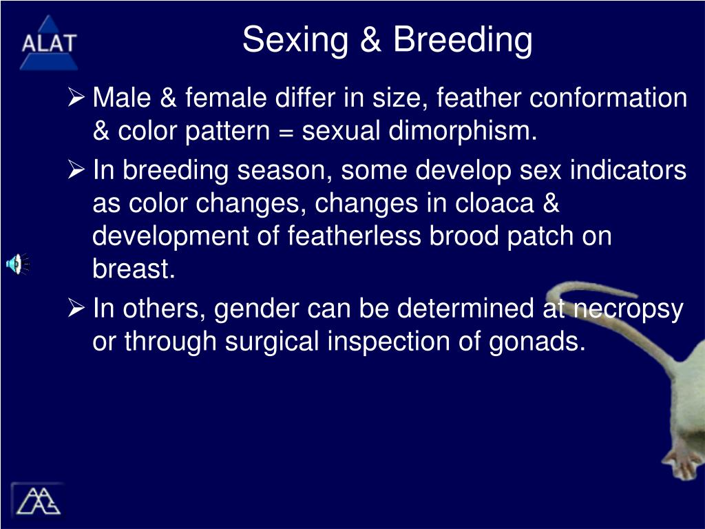 Sexing & Breeding