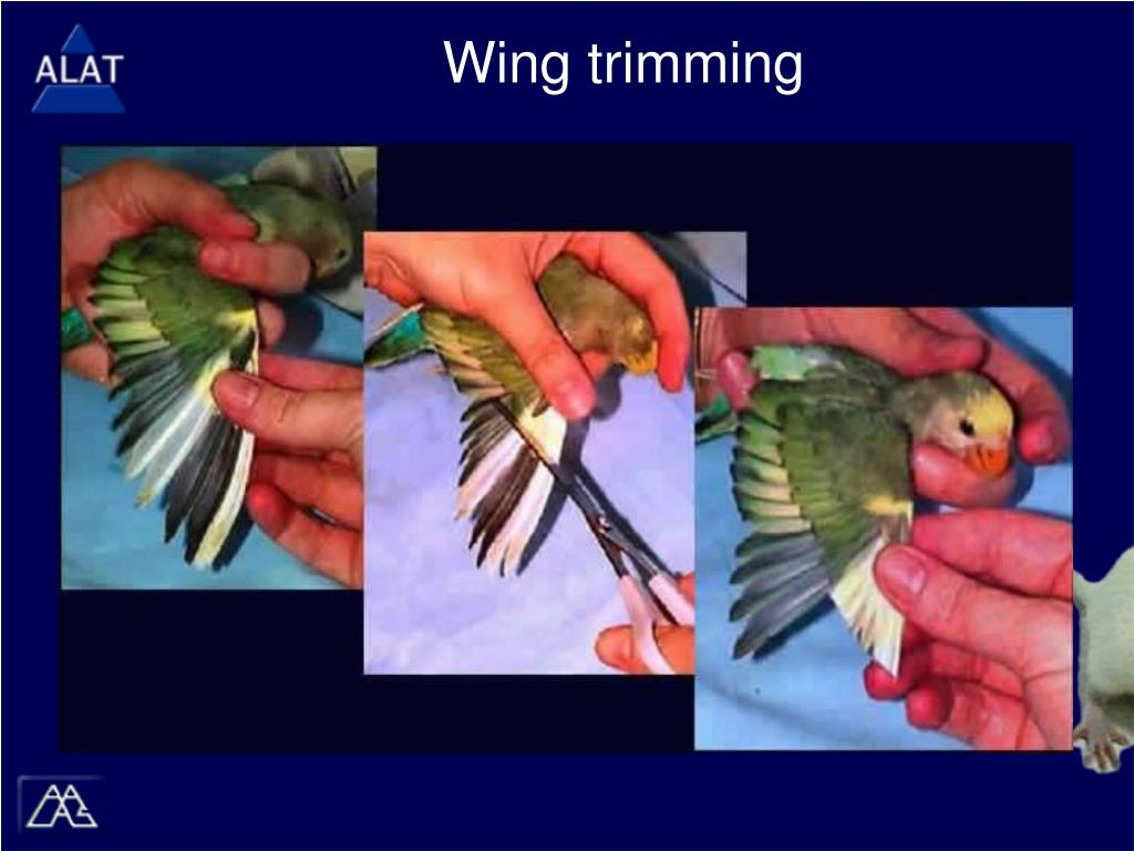 Wing trimming